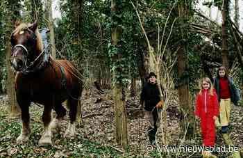 Trekpaard Baron geeft eerste speelbos vorm (Hamme) - Het Nieuwsblad