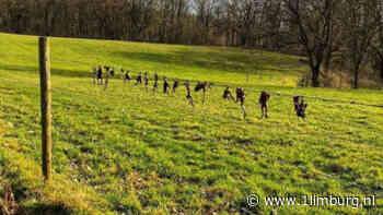 'Vogel verantwoordelijk voor lugubere paddenvondst' - 1Limburg | Nieuws en sport uit Limburg