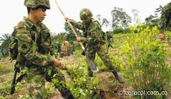 Tensión por erradicación manual en el municipio de Sardinata, Catatumbo - Caracol Radio