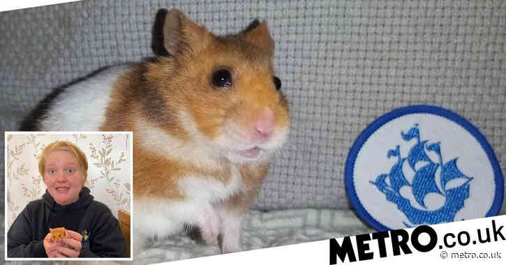Hamster gets Blue Peter badge after helping owner with lockdown