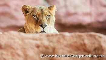 Niedersachsens Zoos hoffen auf eine baldige Öffnung