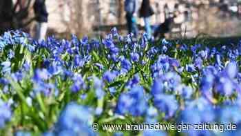 Frühling: Viel Sonnenschein bis Mitte der Woche