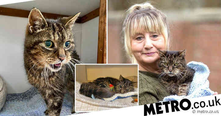 Cat reunited with owner 14 years after he went missing