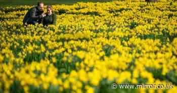 Spring is officially here - so send us photos as we look ahead to brighter days