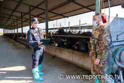 Santa Maria Capua Vetere. Sequestrata azienda zootecnica per inquinamento ambientale - Reportweb