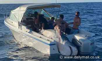 'They caught JAWS!': Massive 394kg shark caught off the coast of Sydney