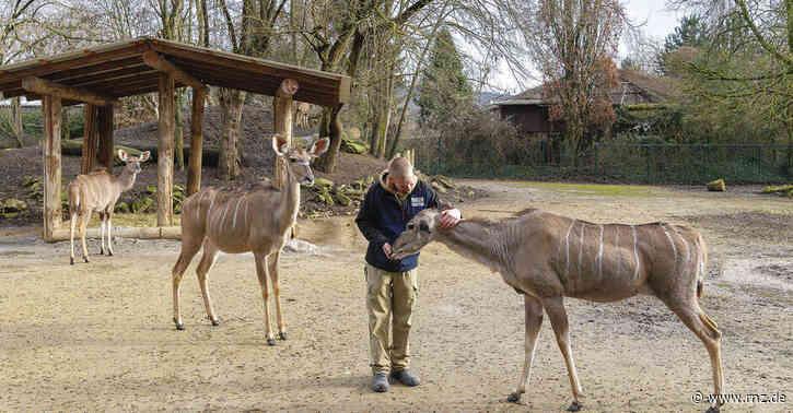 """Tierisch Spannend:  Kudu-Dame """"Stobi"""" ist die Älteste der Herde und schon zweifache Oma"""