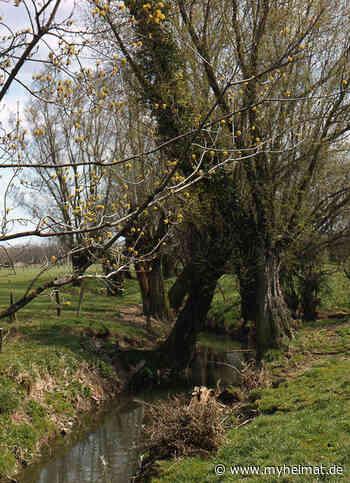 Schnappschüsse: Frühling in der Leineaue - myheimat.de