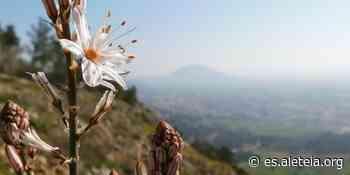 ¿La transfiguración de Jesús pasó en el Monte Tabor? - Aleteia ES