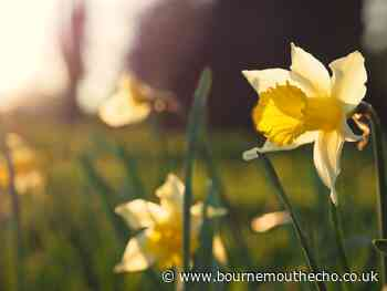 What is St David's Day and why is it celebrated?
