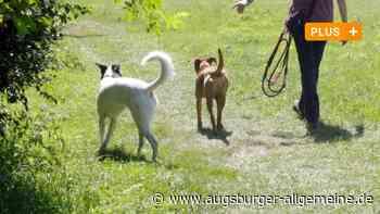 Mehr Hunde in Augsburg: Wenn Tiere und Fußgänger sich in die Quere kommen