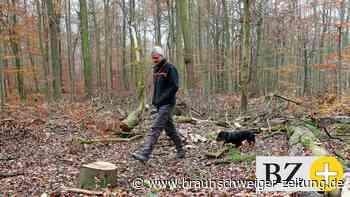 Baumsterben: Wie lässt sich Wolfsburgs Grundwasser schützen?
