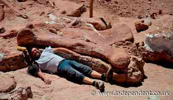 Dinosaur found in Argentina could be oldest titanosaur ever discovered