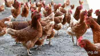 Hühnereier-Belastung mit PCB auf Bauernhof in Wolfsburg-Ehmen