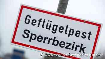 Neue Ausbrüche von Geflügelpest in Niedersachsen
