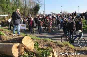 Taverny : le rond-point va bien remplacer les arbres mais le combat continue - Le Parisien