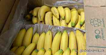 Calgary non-profit going bananas trying to off load pallets of fruit