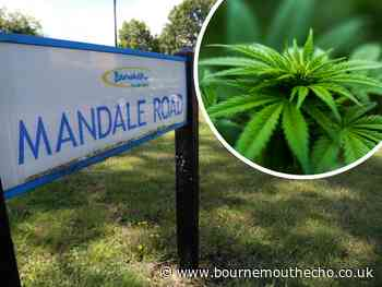 'Extensive and professional': Bournemouth house operating as a cannabis factory