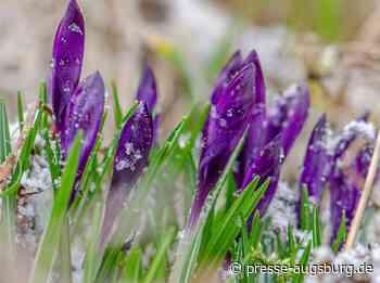 Märzwinter-Intermezzo – Frühlingsgefühle bekommen Dämpfer