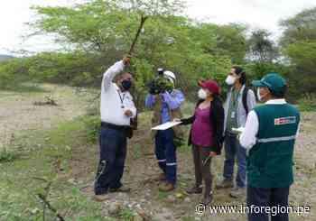Tumbes: Inician estudio para conservar los algarrobos - INFOREGION