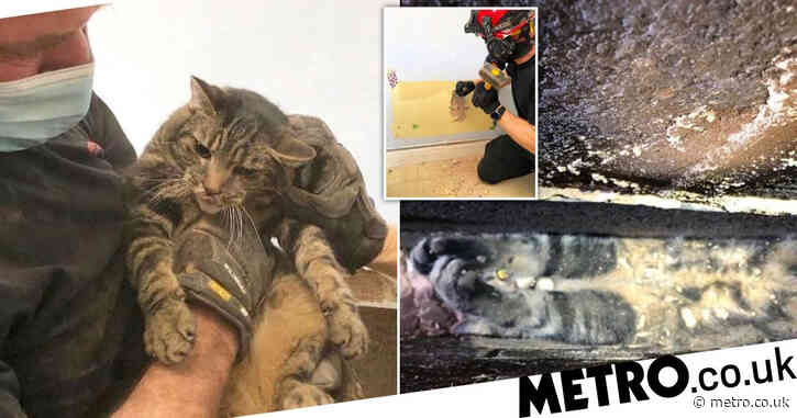 Cat stuck between wall and conservatory rescued by firefighters