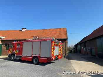 Brandweer Fluvia krijgt bijstand van Westhoek om koe uit rooster te bevrijden