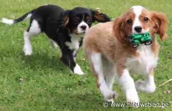 Plannen voor nieuwe hondenweides in Beveren, Bergmolenbos en Beitem
