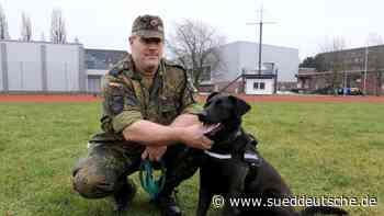 Zahl traumatisierter Soldaten steigt: Therapiehunde helfen - Süddeutsche Zeitung