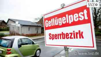 Putenmast in Falkenhagen: Erneuter Geflügelpest-Ausbruch in der Prignitz   svz.de - svz – Schweriner Volkszeitung