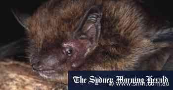 Australia climbs the list of wildlife extinction hotspots