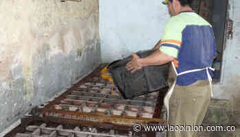 En Bucarasica y Sardinata dejan panela artesanal por pulverizada | La Opinión - La Opinión Cúcuta