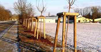 91 Bäume und Sträucher in Monsheim gepflanzt - Wormser Zeitung