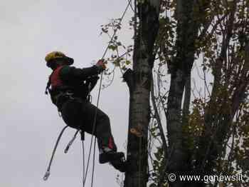 Lavori Enel a Gambassi Terme e Cerreto Guidi, taglio piante e impianti rinnovati - gonews