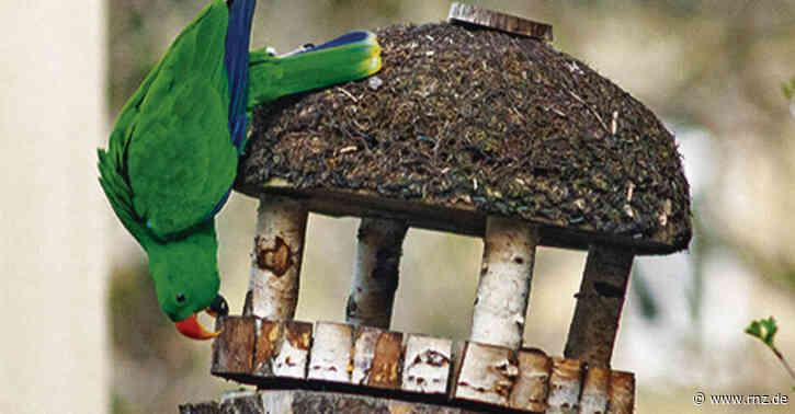 Zoo Heidelberg:  Ein Papagei ist wieder da, einer in der Weststadt unterwegs (Update)