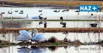 Laatzen: Tausende Vögel in der Leinemasch - Hannoversche Allgemeine