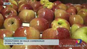 Fraiburgo: Produtores de maçã comemoram ótima colheita - ND