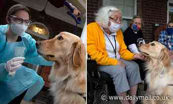 Dogs on the hunt for COVID-19 as nonprofit staffs nursing home with pups trained to sniff virus