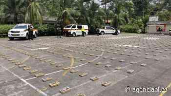 800 kilos de cocaína del Clan del Golfo fueron incautados en Carepa, Antioquia - Agencia de Periodismo Investigativo