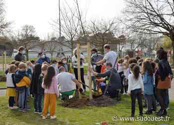 Gradignan : Les écoliers profitent de plus d'arbres - Sud Ouest