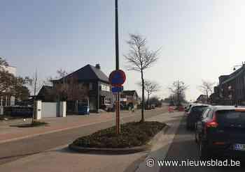 Vervanging van beplanting veroorzaakt files op Diestersteenweg