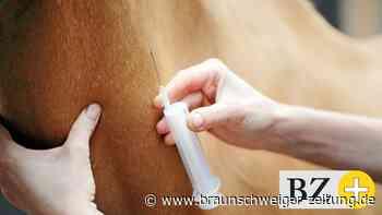 Virus-Schock: Pferde auch in Doha an Herpes infiziert