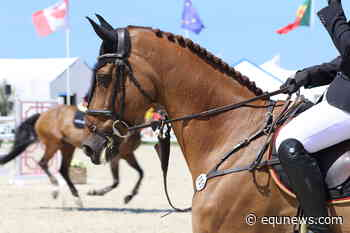 French equestrian sports in lockdown because of rhino outbreak - Equnews International