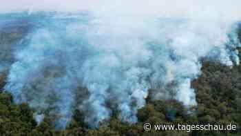 Brasilien: Stecken Rinderzüchter hinter den Urwaldbränden?