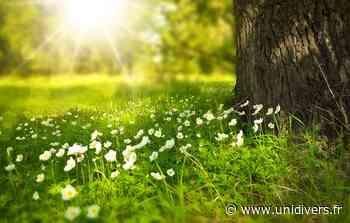Sortie naturaliste accompagnée : Auprès de mon arbre samedi 5 juin 2021 - Unidivers