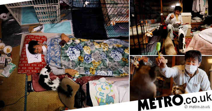 Meet the man who saves forgotten cats in Fukushima's nuclear zone