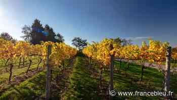 Plaisir partagé au Domaine Bordenave à Monein Respect du terroir et de la nature, culture biologique - France Bleu