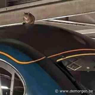Opvallende vertraging op hogesnelheidslijn Londen-Manchester: een koppige kat