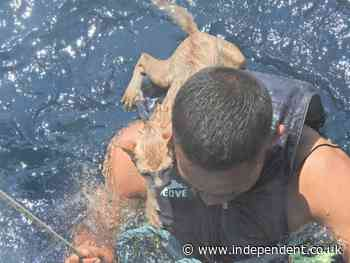 Four cats rescued from sinking abandoned ship by Thai navy