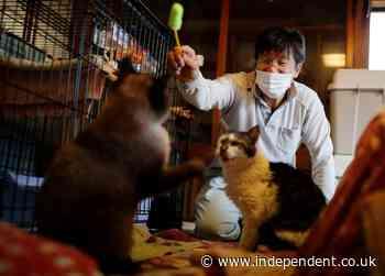 The man who saved Fukushima's forgotten cats