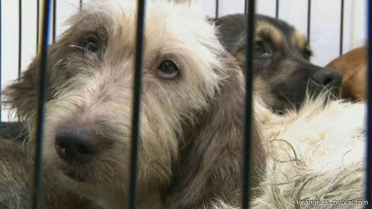 Animal Rescue Organizations Say Pandemic Has Changed Their Industry For The Better